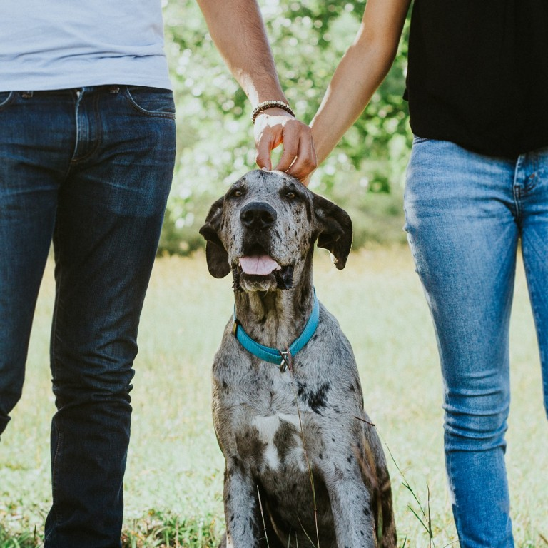 How to ensure your dog is looked after if your relationship breaks down