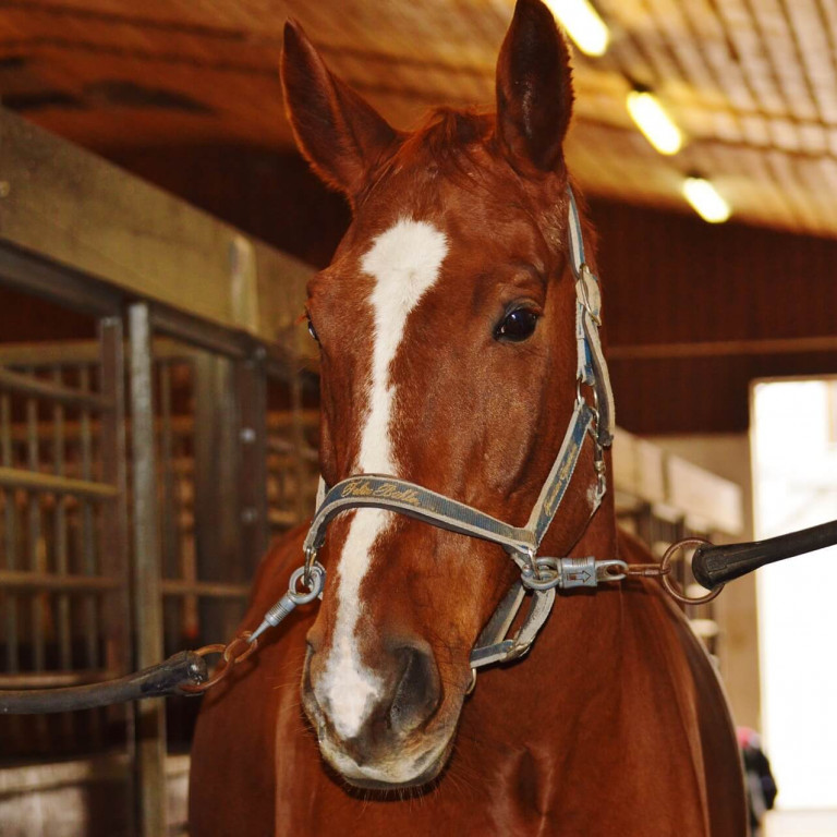 New Rights for Horse Buyers